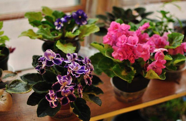 Estä kosteus sisätiloissa, jotta hometta ei kukoista!